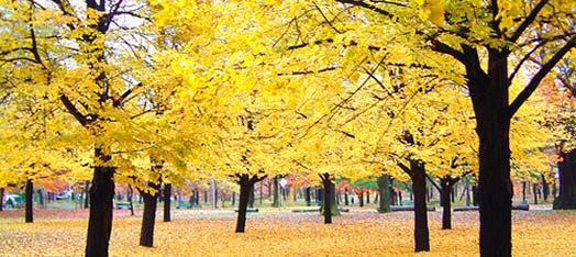 CC_Urban-Trees-Toronto