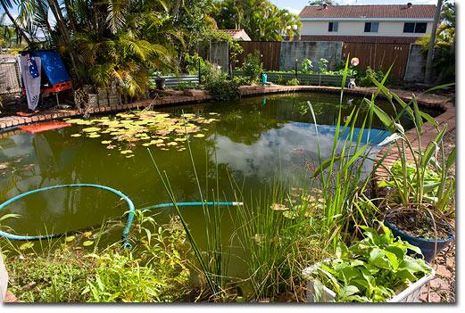 Bir biyolojik havuz rne i permak lt r platformu for Koi pond next to pool