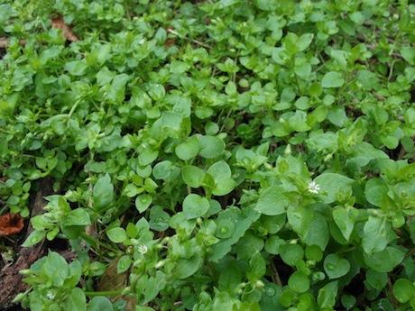 weeds-6